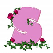 foto of climbing roses  - The letter S in the alphabet set Blushing Roses is soft pink - JPG