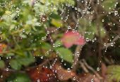Dew Drops On A Spider Web