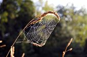 Summer End Spider Web In Morning Light
