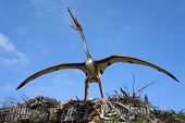 Quetzalcoatlus, classification - Pterosauria, length - 14 m, weight - 200 kG. Model of dinosaur in J