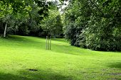 A green meadow in a park at summer.