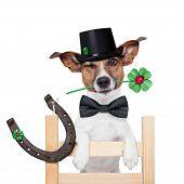 Chimenea barredora perro