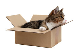pic of snoopy  - snoopy little cat in paper box on white - JPG