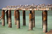 Gaviotas con ruinas de Puerto Cayo Blanco, Cuba