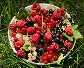 Fresh berries in bowl under sunlight