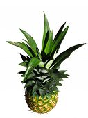Funny Pineapple