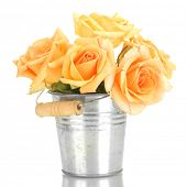 beautiful bouquet of roses in bucket isolated on white