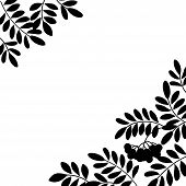 Rowanberry background, silhouette