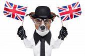 Perro británico