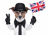 Perro británico Banner