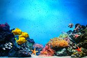 Underwater scene. Coral reef, colorful fish groups and sunny sky shining through clean ocean water.
