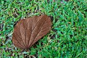 Withered Leaf on gree grass