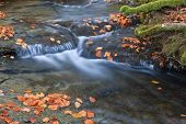 Colors In Autumn Season
