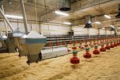 stock photo of hatcher  - The modern and new automated integrated poultry farm - JPG