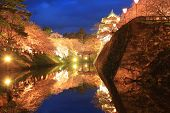 Light Up Of Hirosaki Castle And Cherry Blossoms