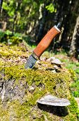 Hunting Knife Stuck Into Stump