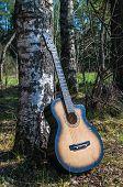 Guitar Near A Tree