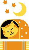 cat dream