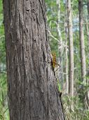 Grasshopper Walking up a Tree