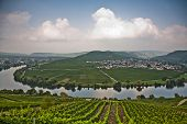 World Famous Sinuosity At The River Mosel Near Trittenheim