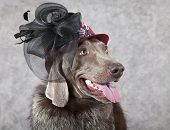 Portrait Of Victorian Style Dog