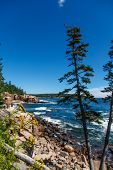 Acadia Coast With Flowers
