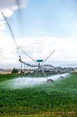 Pivot Irrigation System In An Alfalfa Field