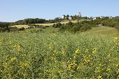 Canola Field And Ancient Castle