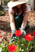 Female Gardener Weeding Among Flowers