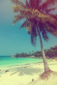Beautiful tropical beach with coconut palm and white sand, vintage summer
