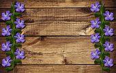 Periwinkle Flowers On Wood