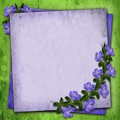 Periwinkle Flowers Background