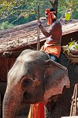 Goa, India - Feb 19, 2008: Indian Man Riding An Elephant. Elephant - A Symbol Of Positive Character