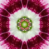 Pink Concentric Flower Center Mandala Kaleidoscope