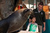 Boy meets Sea Lion at the zoo