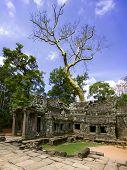 Prasat Ta Prum. Tree And Ruins.