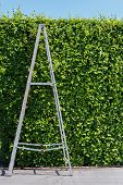 Aluminum Ladder With Wall Green