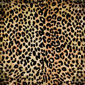 image of cheetah  - Grunge dirty cheetah or leopard pattern close up