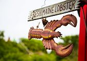 Sign For Fresh Maine Lobster