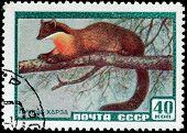 Marten Stamp