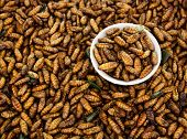 Fried Insects,Thai food.