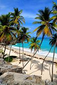 stock photo of caribbean  - Topical Palms at Bottom Bay  - JPG