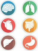 picture of cardiovascular  - A vector icon set of human body parts - JPG