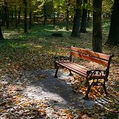 wooden bench in the park in the sunlight