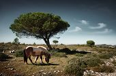 Pony pasturing in a green field with pine trees under the blue sky