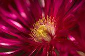 Red Flower Burst