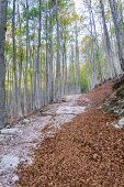 Beautiful Forest In Autumn In The Italian Dolomites