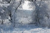 Winter calm frozen landscape with beautiful frosted trees in cold sunny day