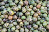 Hog Plum ( Spondias pinnata Kurz )
