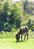 picture of jackass  - Small sweet donkey in a field  - JPG